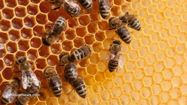 Study links aluminum from geoengineering to accelerating decline in bee populations